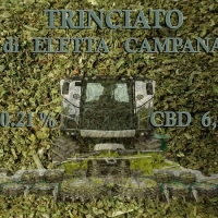 Trinciato top Quality –  10 Gr