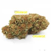 Orange .CONF. 20 GR